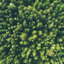An aerial photo of treetops in a dense, healthy forest.